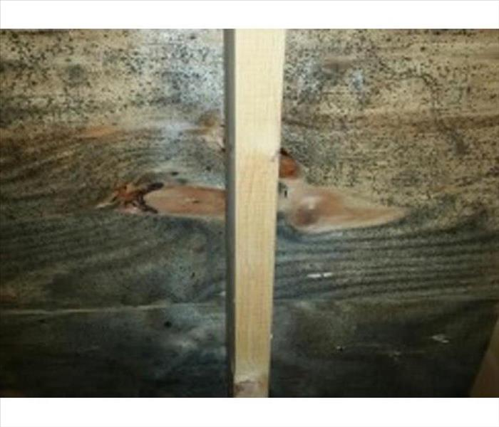 greenish, black stained mold growth on the interior of attic roof