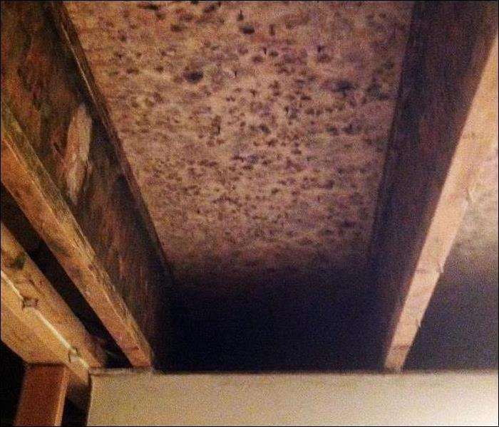 reddish mold spotting on overhead sheathing and joists